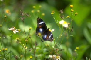 Go on a butterfly expedition. Watch these beautiful butterflies and maybe even raise some butterflies of your own.