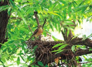 Go bird watching and spot the baby birds. Maybe you'll even find a nest in your own backyard.