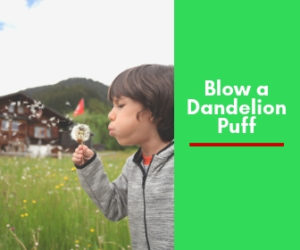 Blow a dandelion puff and make a wish