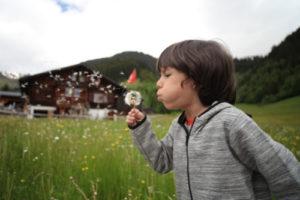 Make a wish on dandelion puff!