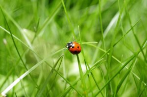 Hunt for ladybugs as you spend time outside. Learn all about ladybugs and maybe even raise some yourself.